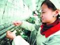 棉价狂涨考验企业
