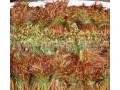 种植,养殖产品