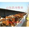 甘肃西门塔尔牛多少钱一头甘肃小牛犊多少钱一头