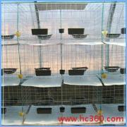 供应镀彩鸽笼、乳鸽笼、肉鸽笼、蛋鸽笼
