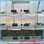 供应鸽笼、度彩鸽笼、蛋鸽笼、肉鸽笼